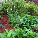 A variety of plants is used to lend visual interest to a mulched bed.