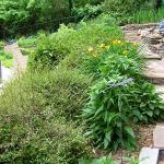 Lush plants cover a sloped area between a walkway and retaining wall.