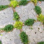 Hardy plants soften the edges of the square pavers on this stone patio.